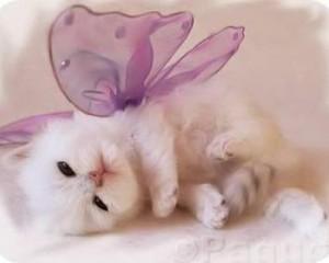 adorable-kitten-dressed_large